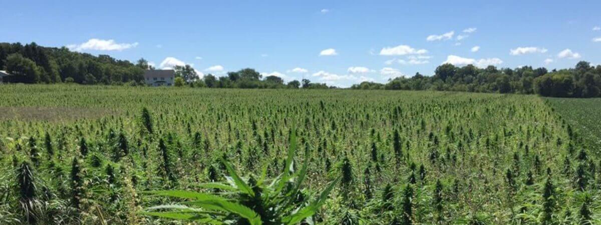 hemp planting base