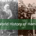 World History of Hemp