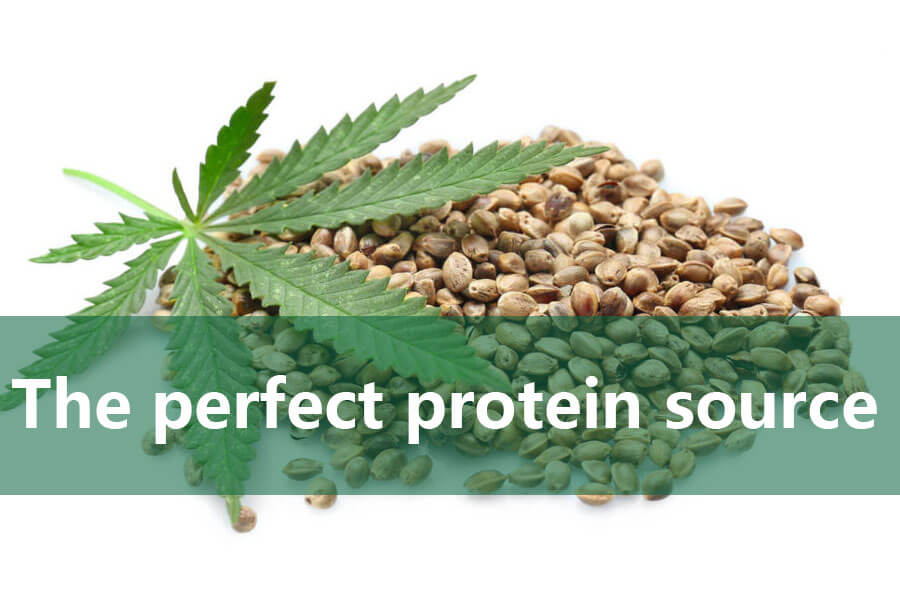 Hemp seed - the perfect protein source